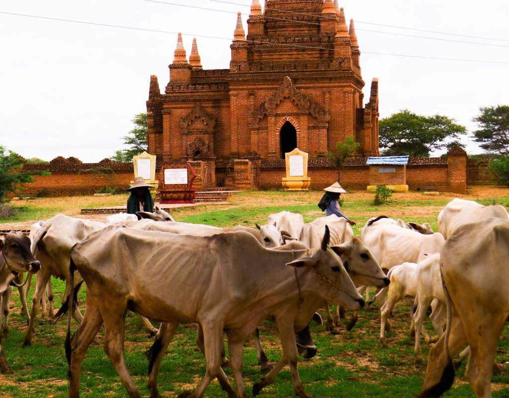 Myanmar - Bagan 13