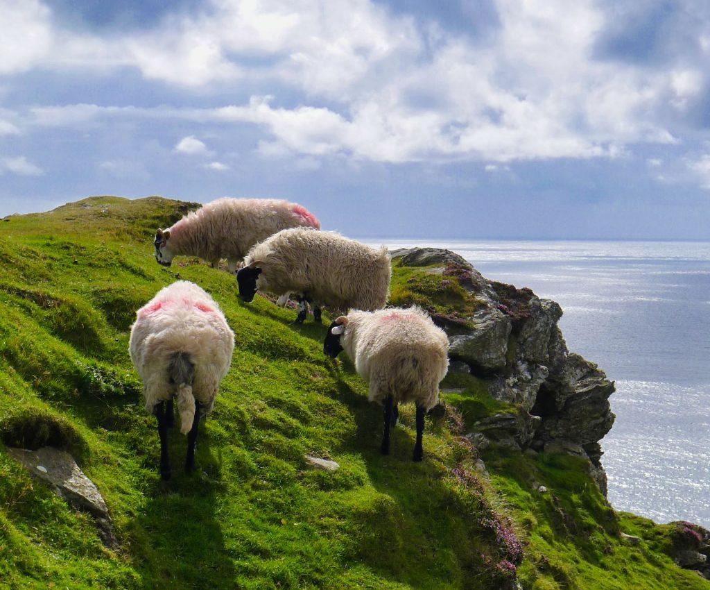 Irland2014-20140821T164556